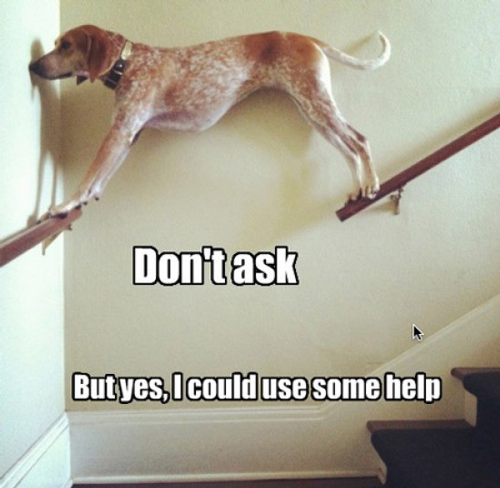 Dog in Hammock and Other Animals Stuck in Funny Positions help stairs dog