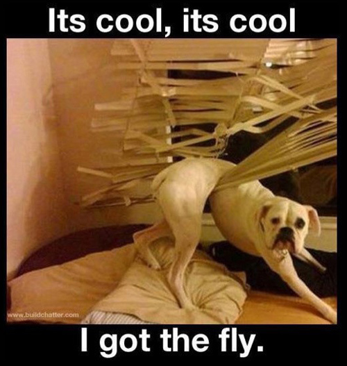 Dog in Hammock and Other Animals Stuck in Funny Positions got fly dog