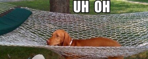 Dog in Hammock and Other Animals Stuck in Funny Positions uh oh