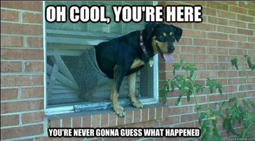 Funny Dog In Hammock Animals Stuck Photos