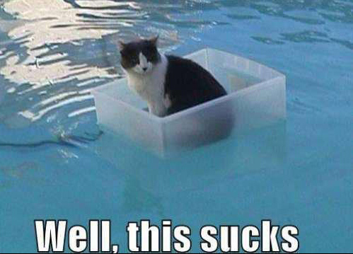 Dog in Hammock and Other Animals Stuck in Funny Positions cat in pool
