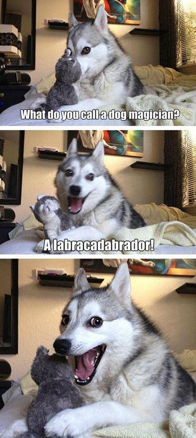 funny pun husky meme dog magician