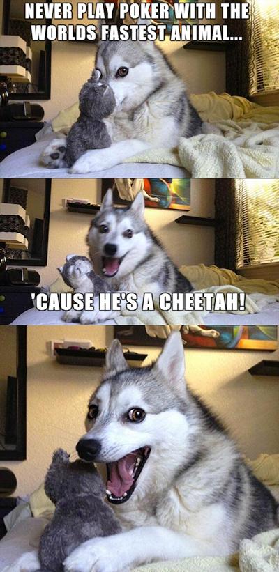 Funny Pun Husky Meme cheetah poker