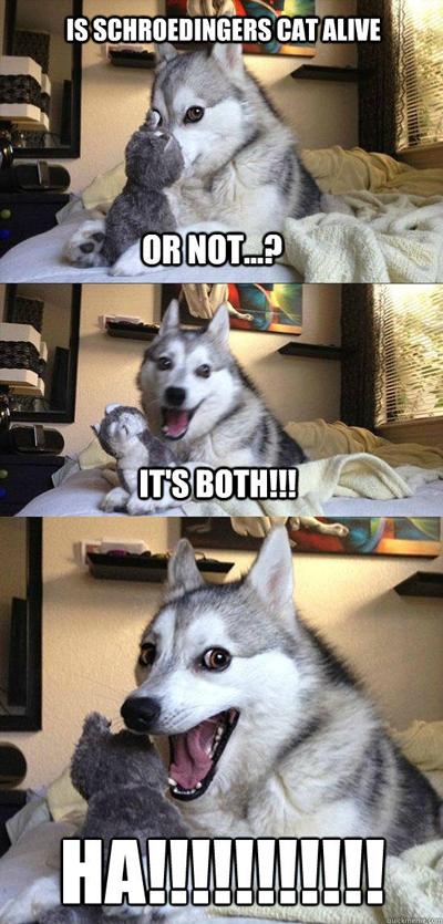 Funny Pun Husky Meme schroedinger cat