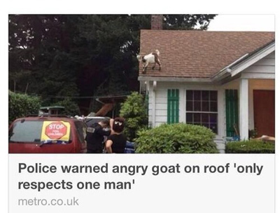 Funny Pictures goat only respects one man