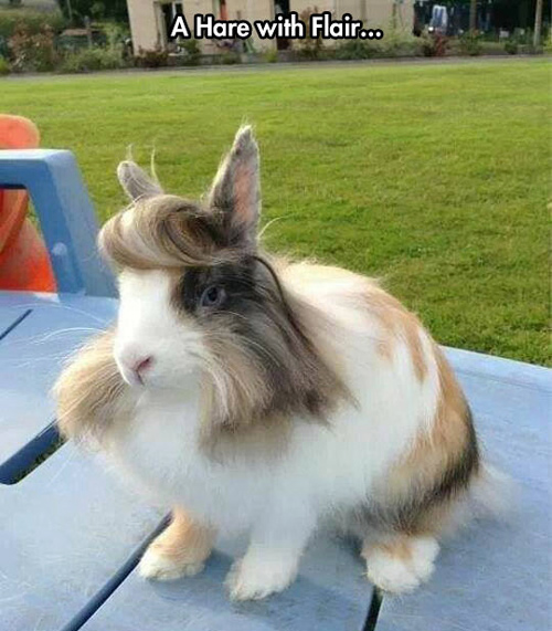 Funny Pictures hare rabbit flair hair