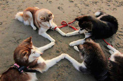 Funny Pictures dog seance
