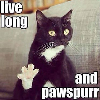 Funny Pictures live long and pawspurr