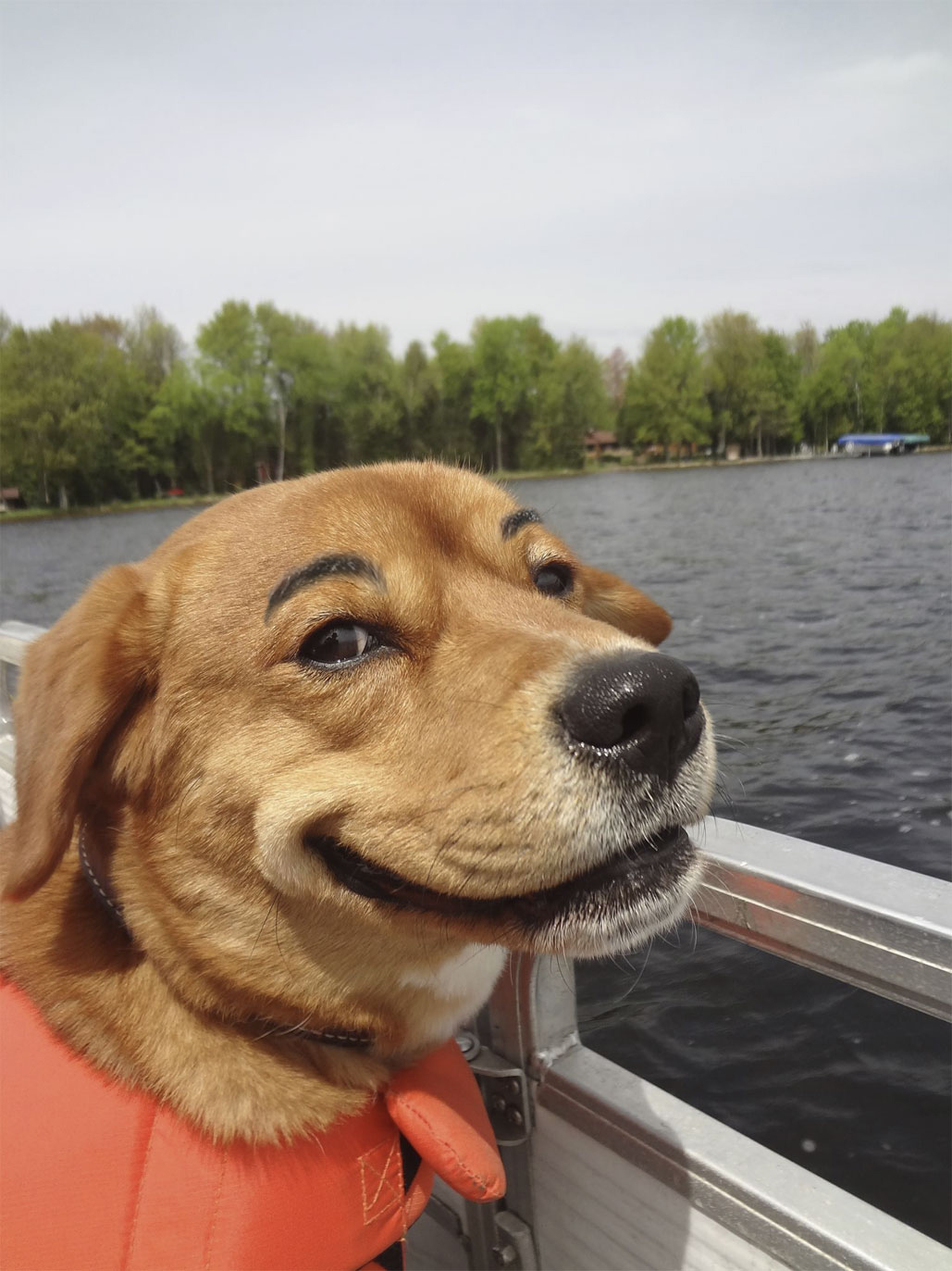20 hilarious dogs with eyebrows dose of funny