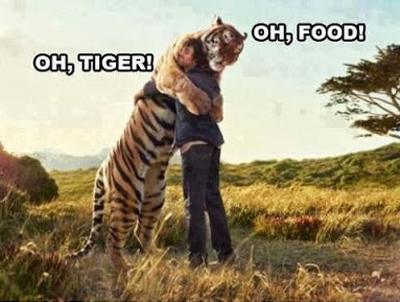 Funny Pictures tiger and food