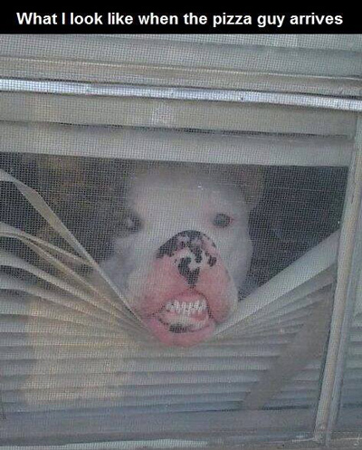 Funny Pictures hello there dog face