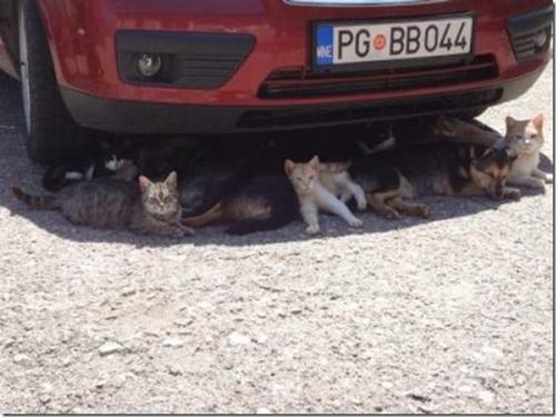 signs-its-hot-cats-shade