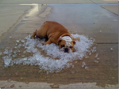 signs-its-hot-dog-ice