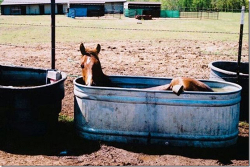 signs-its-hot-horse
