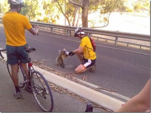 signs-its-hot-koala-bikers