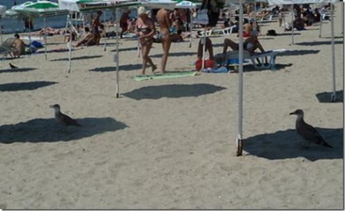 signs-its-hot-seagulls-beach