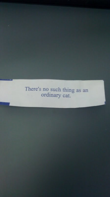 ordinary cat funny fortune cookie