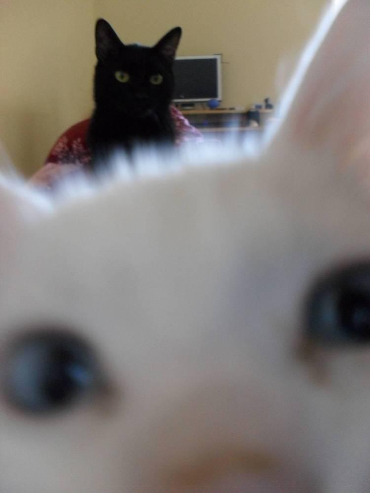 Cat Photobomb Pictures Cat Photobomb Selfie Black Cat