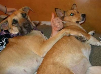 Funny Pictures thumbs up dog perfectly timed photo