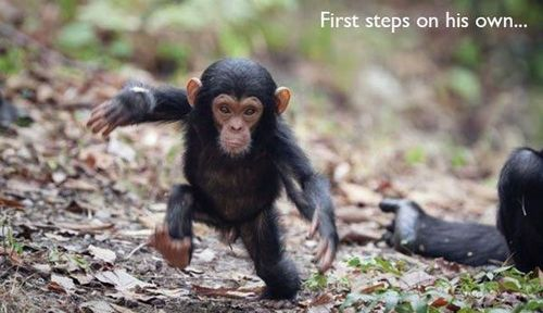 monkey's first steps
