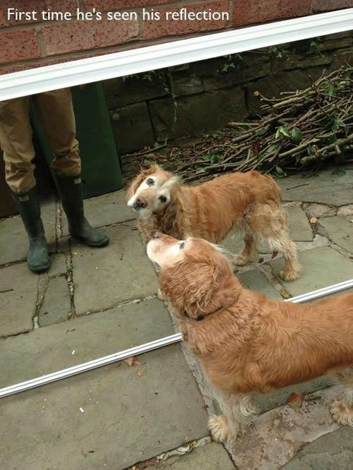 first time dog sees reflection