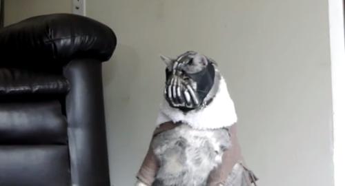 bane cat second video