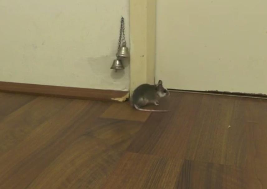 animal video