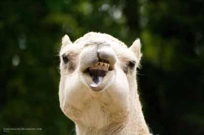 hilarious animal photos