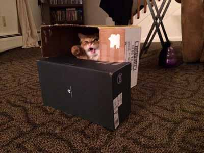 cat forts
