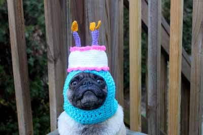 35 Of The Best Pug Moments In History Dose Of Funny