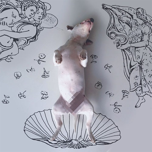 bull terrier illustrations
