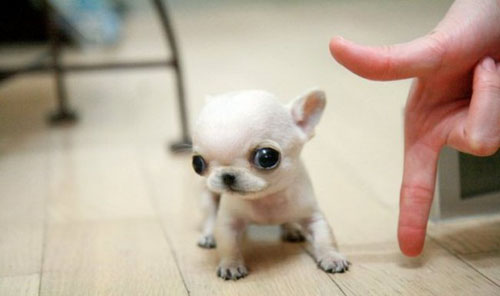 tiny puppies