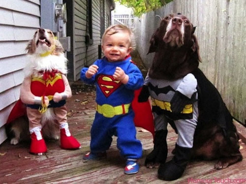 funny pet costumes