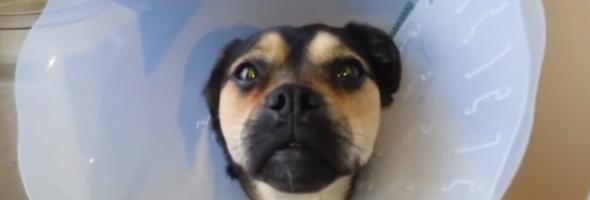dog stoned