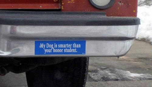 Funny bumper stickers funny bumper stickers funny bumper stickers