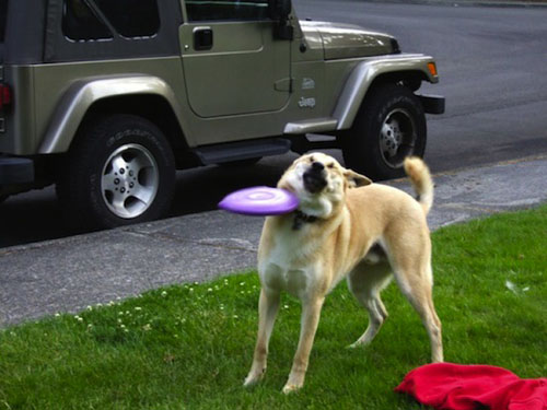 perfectly timed photos